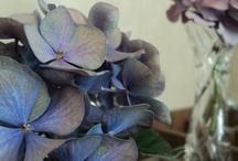 fleurs and co / by Le Comptoir d'Asfeld