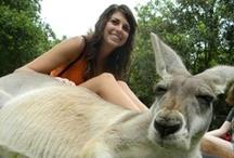 Australia / by NDSU Study Abroad