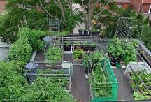 Urban Garden | Sub-irrigated | Self-watering | SIPS / by Johanne Daoust