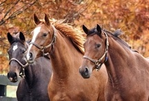 Horses...God's most majestic gift / by Jackie Cavitt