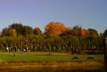 Fall Fun: It's all in Massachusetts / Crisp, fresh air and fall foliage galore. Massachusetts is a rainbow array of colors in autumn. Experience what the season has to offer.  / by Visit Massachusetts