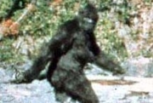 Bigfoot / One of my longtime obsessions. Ever since seeing the Patterson-Gimlin footage in the 70's as a child, I've been hooked. They're out there. It's only a matter of time before we have definitive proof.  / by Diva Bunting