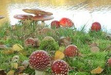 Mushroom and Fungi magic! / by Ashaela Shiri