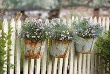 Cottage Garden Ideas / Easy ideas for a cottage garden / by Kitty and Me Designs