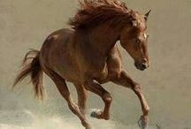 Horse / Memorable photos of horses / by Janice Voss-Crosby