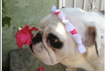 Bulldog Cuteness / by Baggy Bulldogs