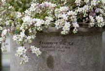 Flowers / by Loretta Bakes