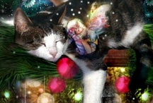 Christmas Kitties / by MaryAlice Smith