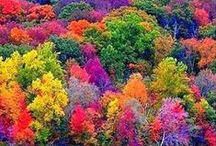 FOREVER FALL / Falling leaves, changing colors,crisp comfortable temperatures..... / by Kelli McKinney