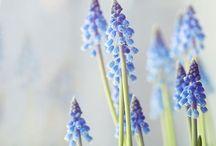 Flower * / by Farica Jow