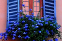 Window Boxes & Beautiful Doors / by Carole Hudicek