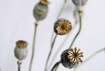 plantas / by Yamily Chiquini
