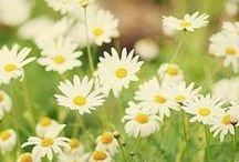 Spring Fever! / Everything Shoplet loves about celebrating spring! / by Shoplet UK