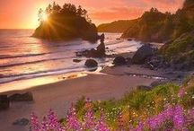 California / by Joann