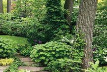 Woodland Idyll / Favorite shade plants / by pamela joy