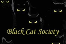 BLACK CATS / cats / by Karen Solo