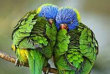 ♥ BIRDS ♥ / by Oceana King