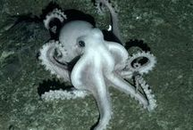 Water Creatures / Oceans, Seas, Lakes, Ponds, Rivers / by Jeff's Pins
