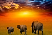 Wildlife around the World / Our friends---the animal kingdom! / by Mary De