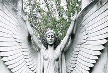 Wings / by Susan Garnett