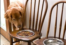 Pet Furniture / by Hampton Roads Veterinary Hospice