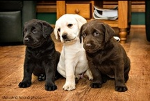 ! * ADORABLE CUTE PUPPIES &  DOGS ! / Cute Puppies & Dogs  / by Gillian Haberfield