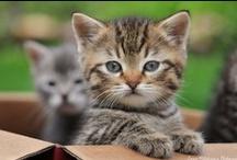 ! ADORABLE CUTE KITTEN'S & CAT'S ! / CUTE & ADORABLE KITTEN'S & CAT'S / by Gillian Haberfield