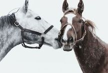 ( H O R S E' S : ) / Beautiful Horse's  / by Gillian Haberfield