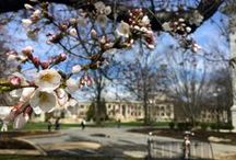 AU Campus / Photos of the American University Campus / by School of Professional & Extended Studies (American University)