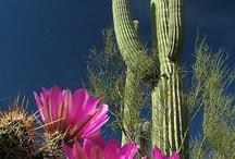 Beautiful Tucson & AZ / by Joanne Allen