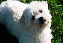 Dogs and Doggie Stuff / by June Nowlin-Simonton