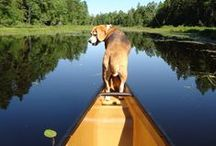 Maine Dogs / Celebrating Maine's furry, four-legged residents.  / by Down East Magazine