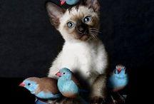 Cuteness! / by Trine Paulsen