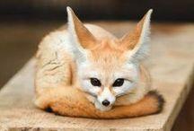 Animals / by Kina de la Paz