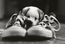 Sooooooo Cute ! / by ELODIE FROST FROST