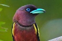 birds 3 / by Paul Derksen