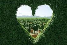 Happy heart / by Solomija Podkrólewicz
