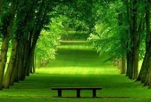 Vegetation & Plants / by Massage Tools