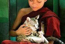 gatos e seus humanos / by Gatices