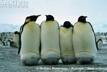 Penguins / by Joni Alane