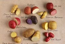 Biodiversity (Food & Crops) / by The Food Museum