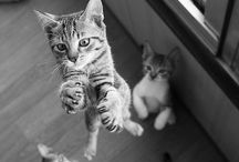 Cats / The most cute and sweet cats and kittens ♥ / by Maartje