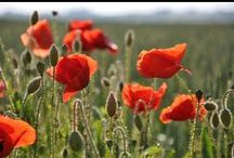 Remember / Not just war memorials and poppies, though those are important too. Help us find new images and poems that you associate with 'REMEMBER' - theme of this year's National Poetry Day / by National Poetry Day