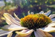 Flowers & Shrubs / by Linda Brown