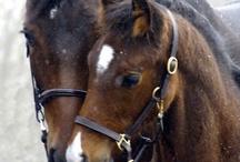 Horses / by Linda Brown