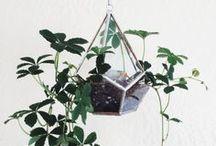 | houseplants | / by manda townsend