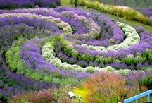 creative plantings / by Susan Erickson