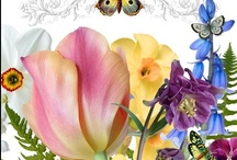 Flower Scenes / by Bette