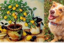 Holistic & alternative pet remedies and care / Some holistic & homeopathic remedies and treatments as well. / by Raven Hawk
