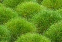 Grasses & Flowers / by Barbara Ponti